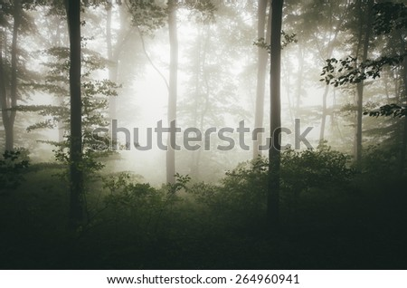 bright light in green misty forest - stock photo