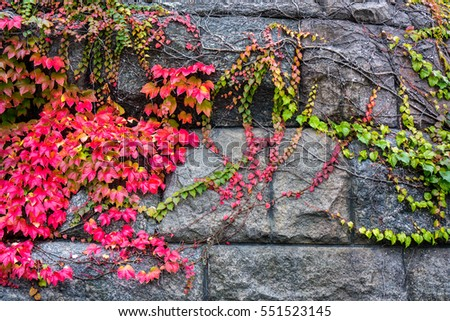 bright lilian purple crimson green leaves on grey paving stone texture, different sizes stones with horizontal lines and squares of paving stone road with colorful alive leaves as background