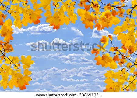 Bright maple branches against the blue sky - stock photo