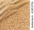 Bright mature wheaten ears lie on wheat grains - stock photo
