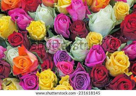 Bright multicolored bouquet of roses. Natural roses flowers background, soft focus  - stock photo
