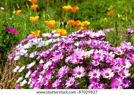 bright multicolored flowerbed. horizontal shot. small GRIP