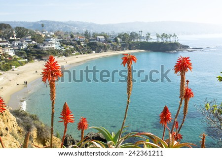 Bright orange Aloe Vera cactus blooms framed against a beautiful beachfront cove with turquoise water in Laguna Beach, California.A - stock photo