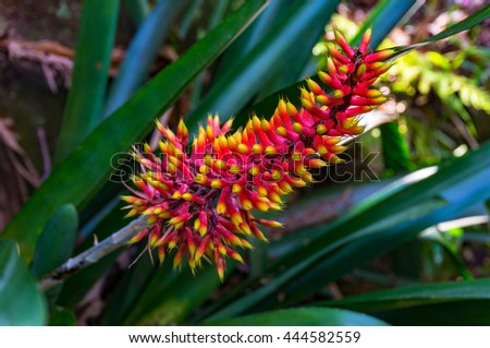 Bright orange and yellow exotic flower in full bloom against green foliage background. Tropical flower surrounded with lush green leaves. Close up, selective focus, space for text - stock photo