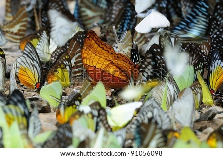 Bright Orange Butterfly Standing Out from the Crowd. - stock photo