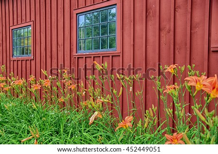 Bright orange daylilies against a red building