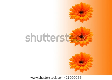 Bright orange floral background in horizontal landscape. This could be used for paper; cards; background etc - stock photo