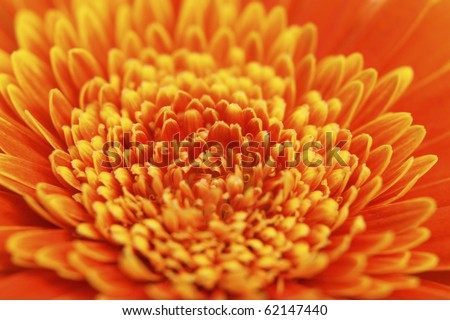 bright orange gerbera flower heart closeup - stock photo