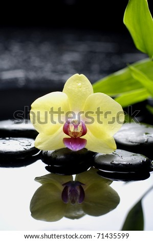 Bright orchid and green bamboo leaf with stone reflection - stock photo