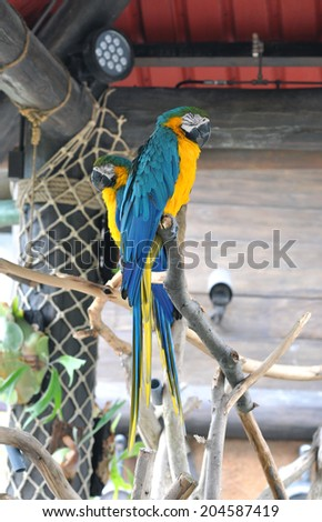 Bright parrot - stock photo