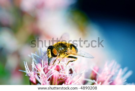Bright photo of BEE working on flower
