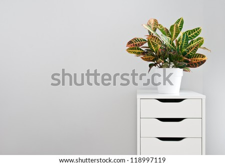 Bright plant and modern white drawer chest. - stock photo