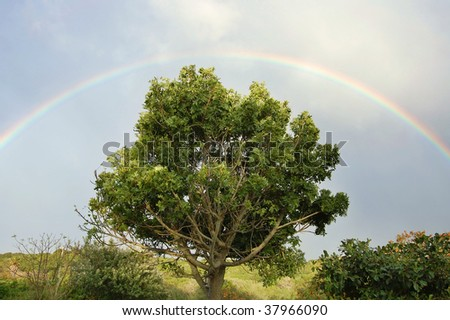 Bright rainbow in blue sky over solitary tree