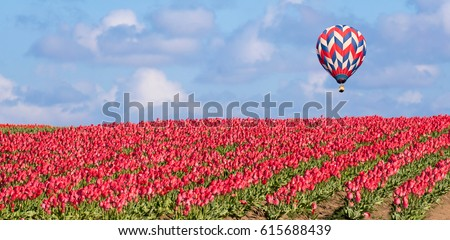Bright Red Fields of Tulips in Springtime with Blue Sky, Clouds and Hot Air Balloon Panoramic