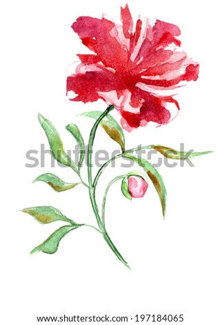 bright red flower on a white background - stock photo