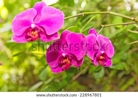 bright red orchid on the background of green foliage - stock photo