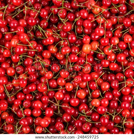 bright red ripe fresh gathered cherries background - stock photo