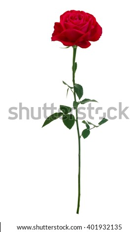 Bright red rose isolated on white background - stock photo