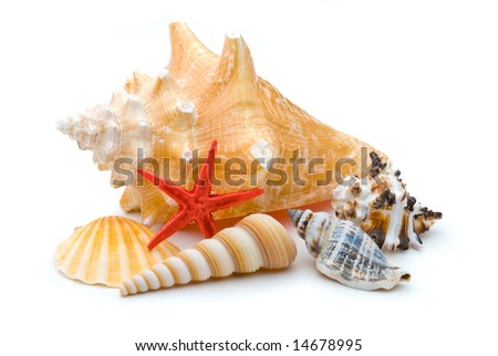 Bright red starfish sea star among collection of several weathered sea shells, on white background