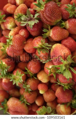 Bright red strawberries closeup in the photo