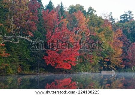 Bright red tree hangs down over the calm lake water on a autumn morning - stock photo