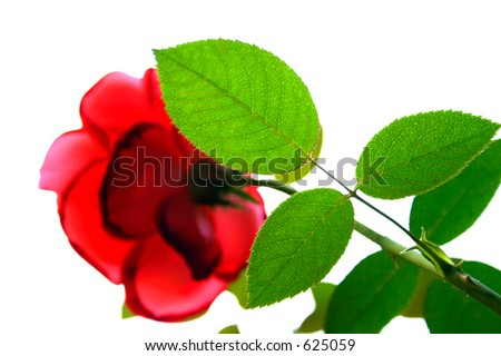 Bright Rose Leaf