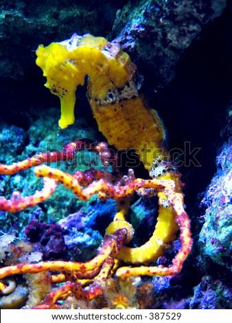 Bright sea horse - stock photo