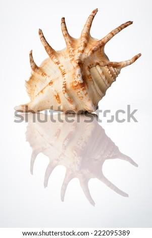bright sea shell - stock photo