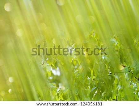 Bright sparkling background of gently green shades with leaves under spring heavy rain. - stock photo