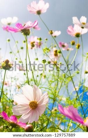 bright spring flowers - stock photo