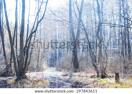 bright spring forest - stock photo
