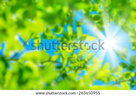 Bright spring natural background from the fresh leaves of willow - stock photo