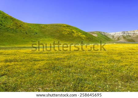 Bright spring yellow flowers, desert gold and California poppies near mountains in the Carrizo National Monument, on Shell Creek Road, in San Luis Obisco County, California, - stock photo