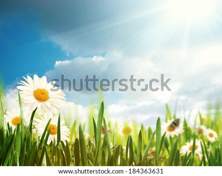 Bright summer afternoon. Natural backgrounds  - stock photo