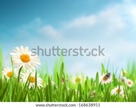 Bright summer afternoon. Natural backgrounds with beauty daisy flowers - stock photo