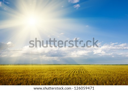 bright summer landscape. wheat field and sky - stock photo