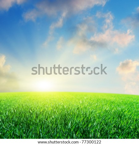 Bright sun and green grass field. - stock photo