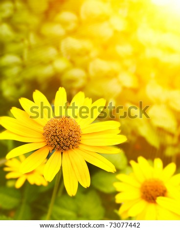Bright sun and yellow flowers - stock photo