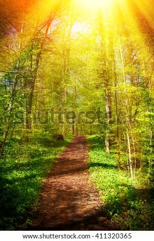 Bright sun in forest - stock photo