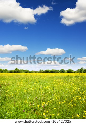 bright sun over flower meadow. Composition of nature.