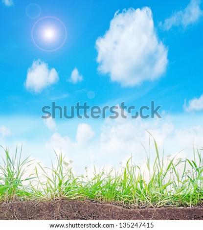 bright sun over green grass - stock photo