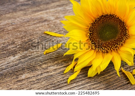 bright sunflower  close up on wooden table background - stock photo