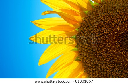 Bright sunflower. Composition of the nature - stock photo