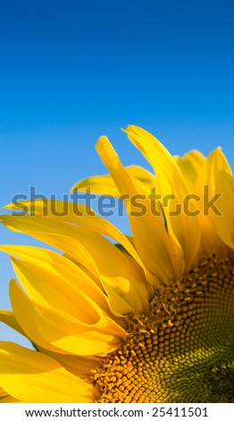 Bright Sunflower Detail - stock photo