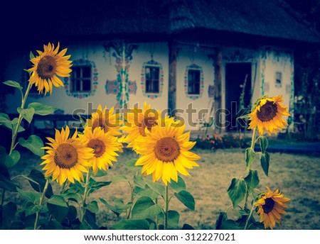 Bright sunflowers  and traditional Ukrainian rural hut at blur background. Ethnic decoration at the fair - folk culture of Ukraine, tradition rural house and yellow sunflowers in front view. - stock photo