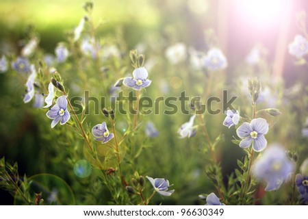 Bright sunlight in a summer meadow.