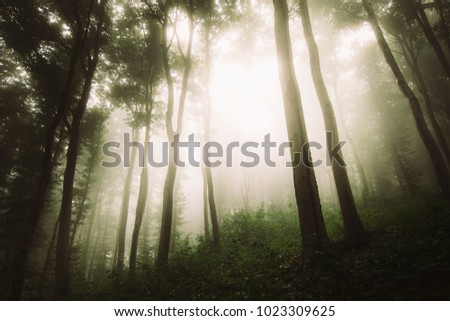 bright sunlight in natural forest, dramatic perspective