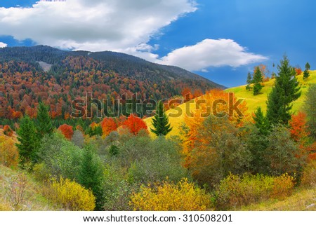 bright sunny autumn in the mountains. Colourfull wood - stock photo