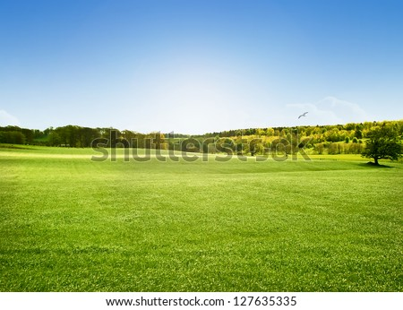 Bright sunny day at Alnwick Pastures, Northumberland - stock photo