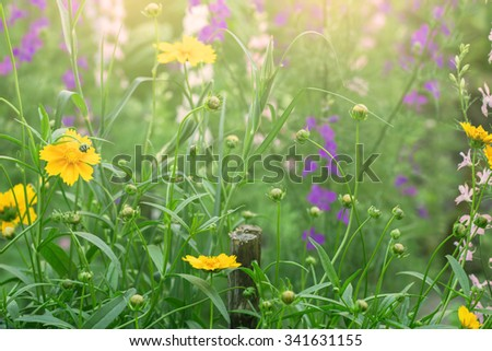 bright sunny meadow with flowers - stock photo